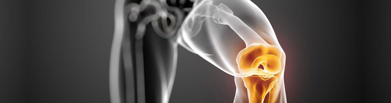 Huesos & Articulaciones