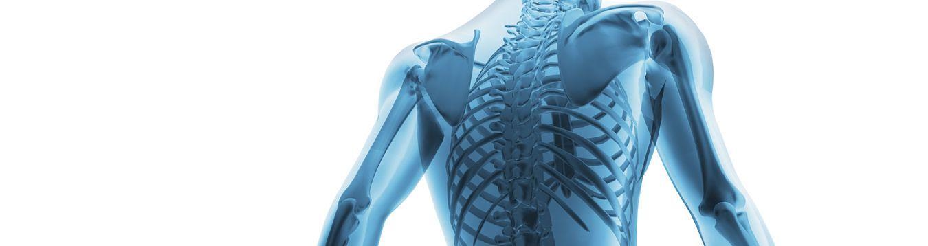 Regeneración Huesos