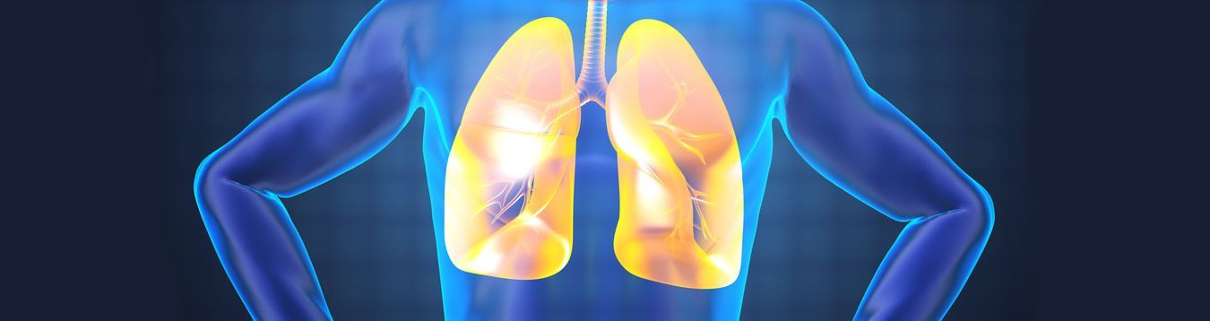 Pulmones - Bronquios