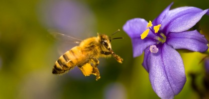 THE BEES AND OUR HEALTH