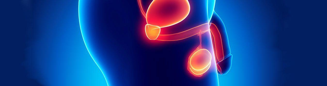 Prostata & Disfunción Erectil