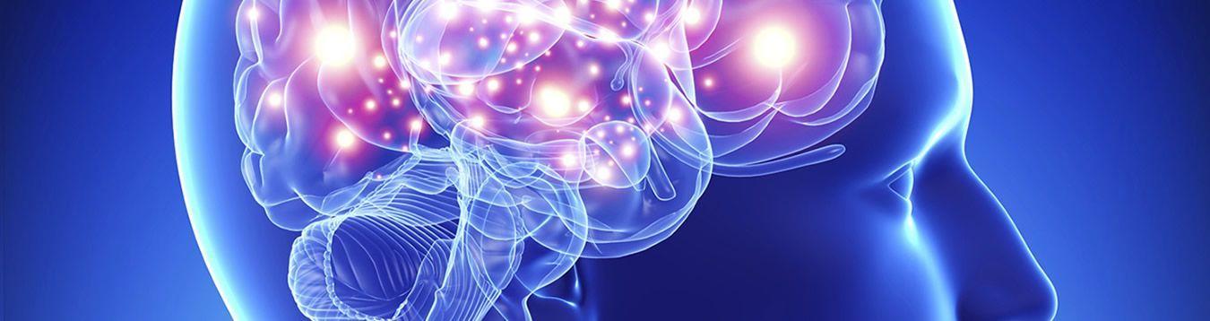 Brain - Hearing - Vision
