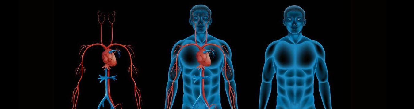 Circulatory Sys. Protectors